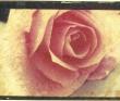 池田響子 光の版画、アンティーク、薔薇、ポラロイド転写、コラージュ。