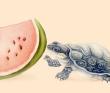 果蔬亀図3