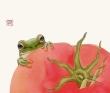 果蔬蛙図3