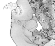 城芽ハヤト 人物、植物、挿画、装画、アジアン、線、モノクローム、TIS、講談社出版文化賞。