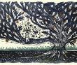 山福朱実 木版画、絵本、挿絵、装幀、自然、動植物、宇宙、生死。
